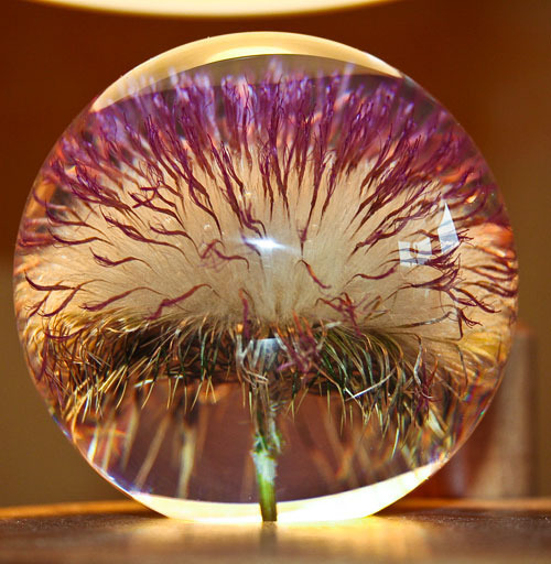 Paperweight open Thistle