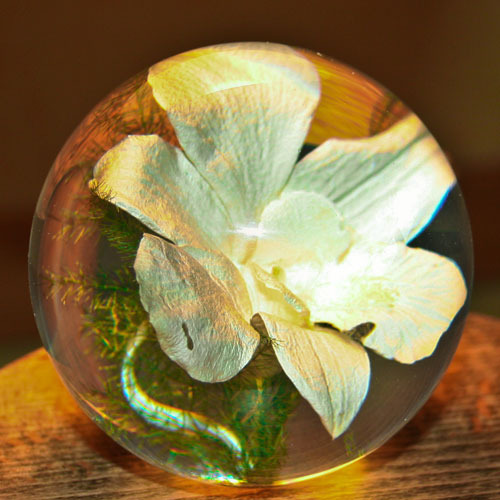 Paperweight Orchid