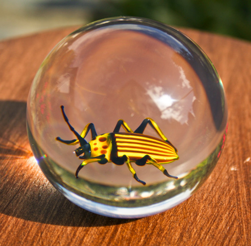 Paperweight Potato Beetle
