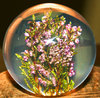 Paperweight Heather