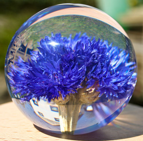 Paperweight Cornflower