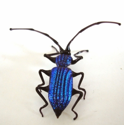 blue jewel beetles