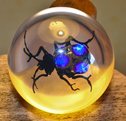 Paperweight Bolivian stain beetle