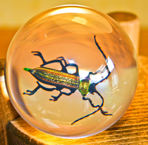 Paperweight Spanish Fly